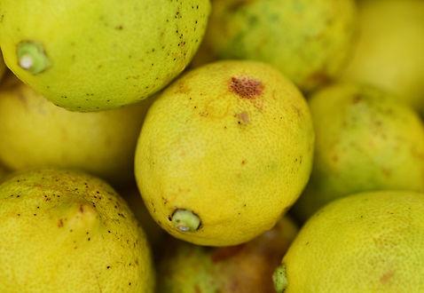 無農薬栽培レモン
