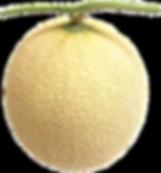 クラウンメロン(マスクメロン)