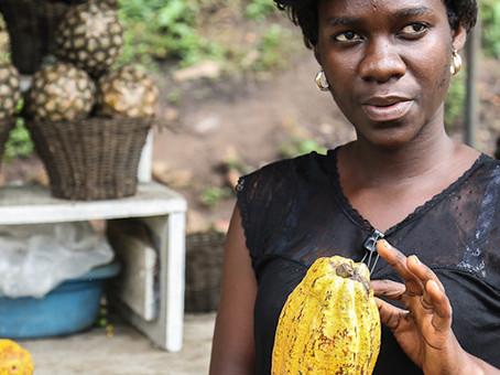 Wenn der Klimawandel nicht gestoppt wird, verlieren  Millionen Kakaobauern ihrer Einkommensquelle