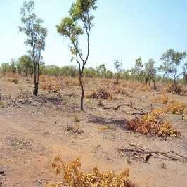 """Die Temperatur steigt immer weiter und vertreibt die Kleinbauern aus dem einstigen """"Brotkorb"""" Ghanas"""
