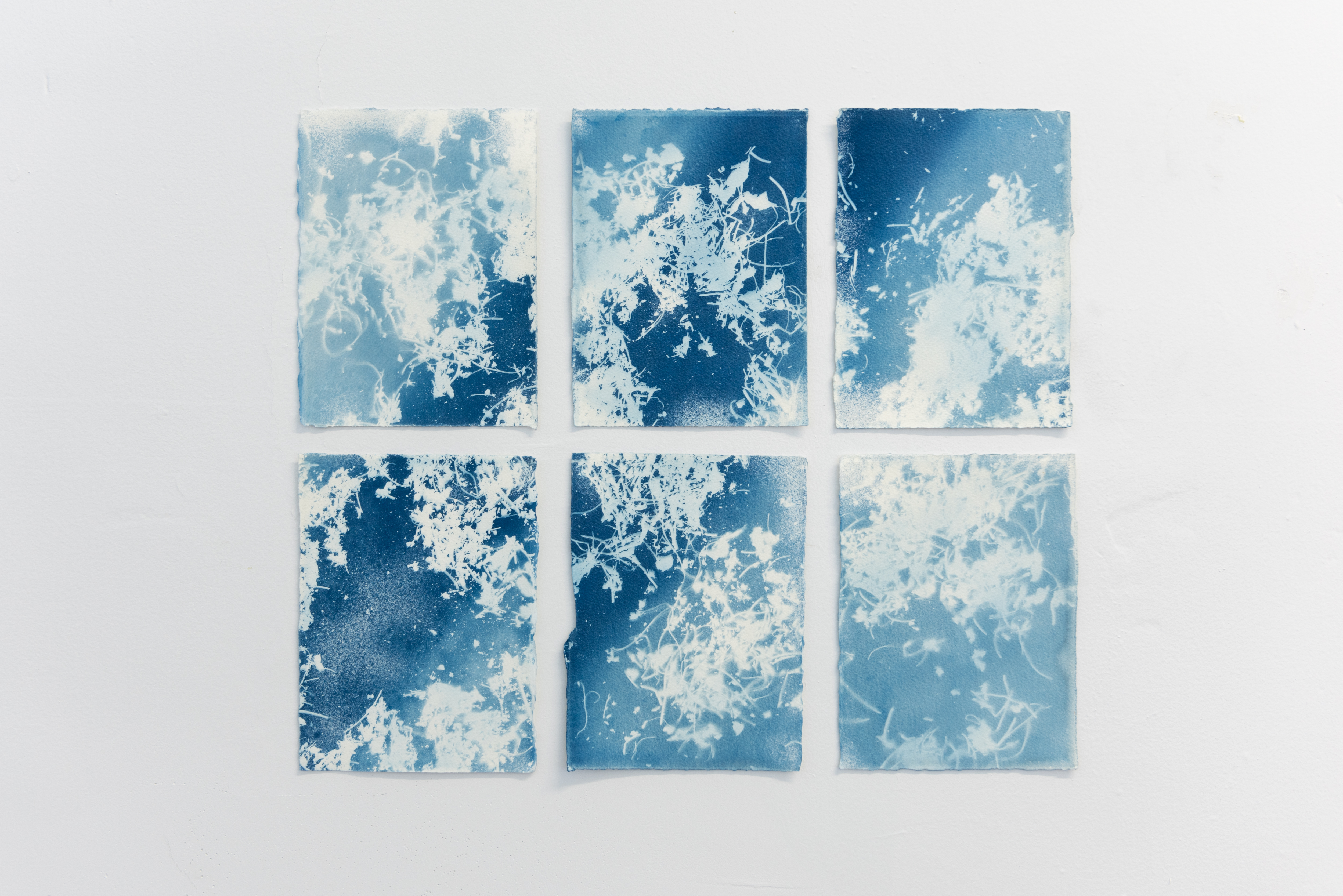Cyanotypes Marie-Claude Drolet