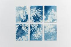 Cyanotypes Marie-Claude Drolet