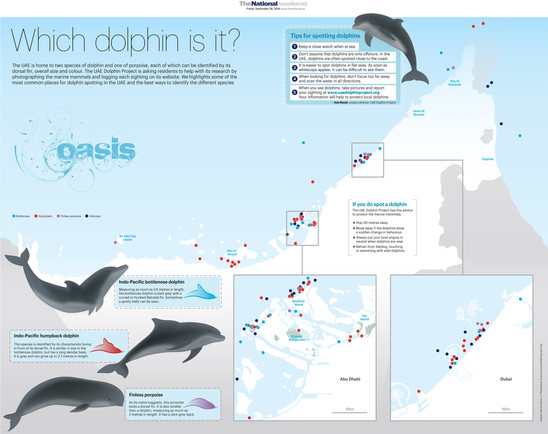 Dolphins in the UAE