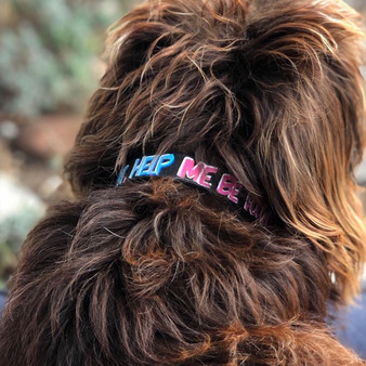Personligt handmålat hundhalsband