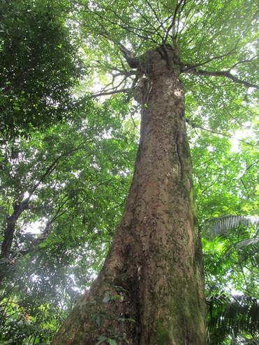 AMAZÔNIA: NOTAS SOBRE PESQUISA E SOBRE OS TEMPOS