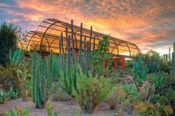 DBG Cactus Gallery