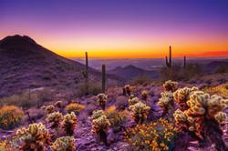 McDowell Sonoran Preserve - Purple