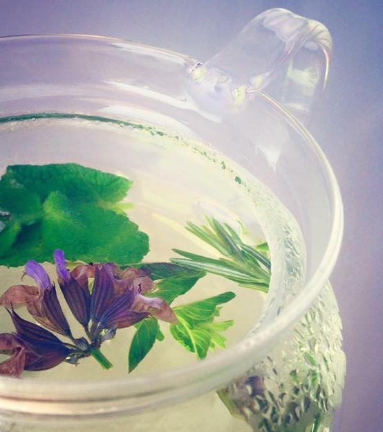Organic Fresh Herb Tea