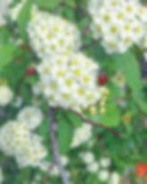 E4C1DF4C-0688-41CD-B030-557E60B07A78.jpg