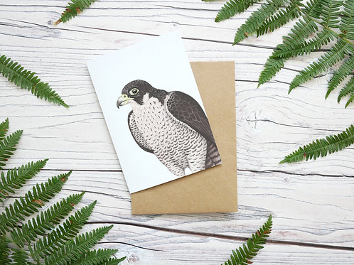 Illustrated peregrine falcon greetings card made from 100% recycled card and plastic-free wrapper