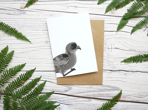Illustrated storm petrel card made from 100% recycled paper and plastic-free wrapper