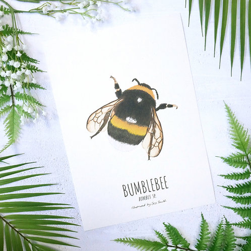 Bumblebee wildlife illustrated limited edition unframed print by Jess Smith from Silverpasta Crafts