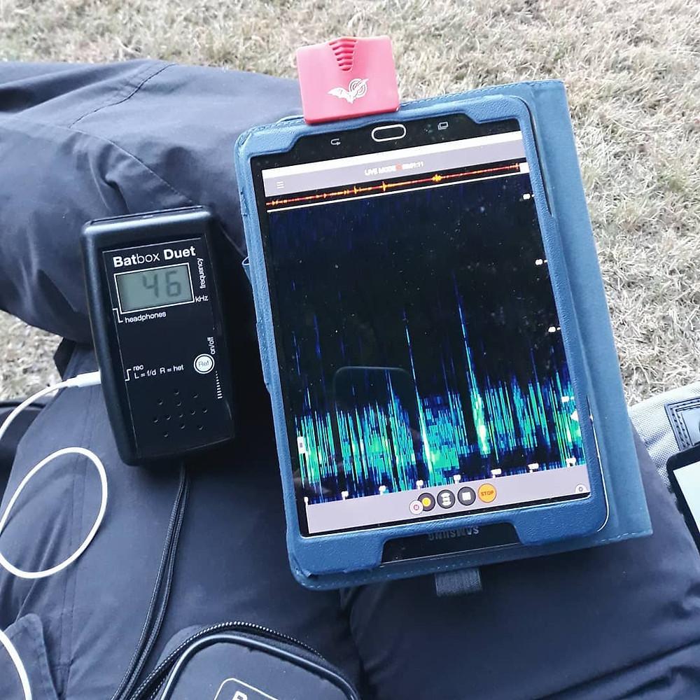 Bat detector batbox duet echometer touch 2