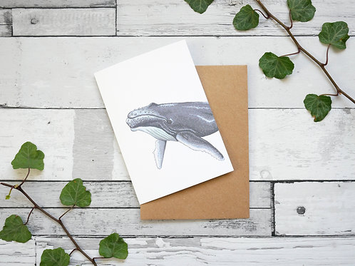 Silverpasta illustrated animal greetings card made from recycled paper featuring a humpback whale with plastic free packaging