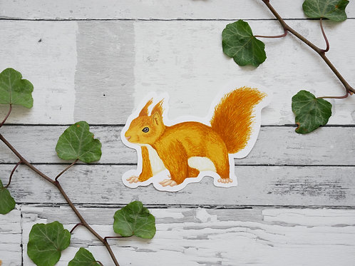 Silverpasta illustrated red squirrel vinyl sticker 10cm