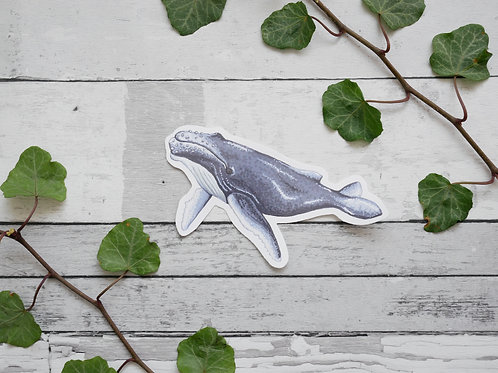 Silverpasta illustrated humpback whale vinyl sticker 10cm
