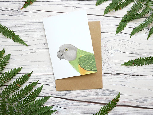 Illustrated sengal parrot greetings card made from 100% recycled card and plastic-free wrapper