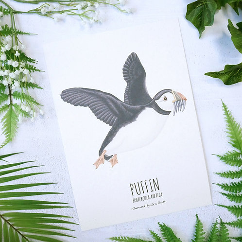 Unframed illustrated art print of a puffin by Jess Smith from Silverpasta Crafts