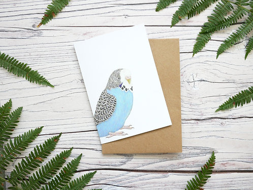 Illustrated blue budgie greetings card made from 100% recycled card and plastic-free wrapper