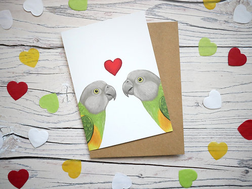 Illustrated valentine's day card featuring two senegal parrots and a heart by Silverpasta Crafts
