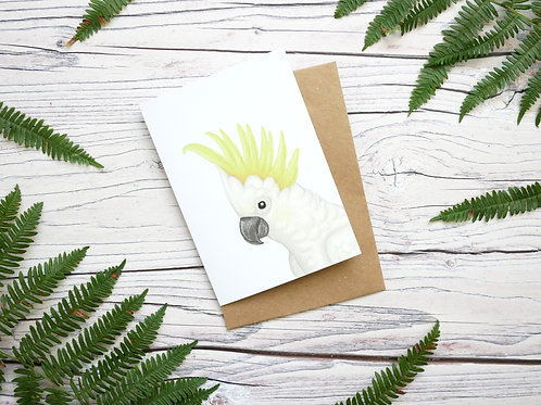 Illustrated sulphur crested cockatoo greetings card made from 100% recycled paper and plastic-free wrapper