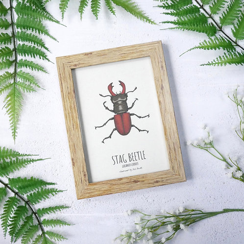 Framed stag beetle art print by Jess Smith from Silverpasta Crafts