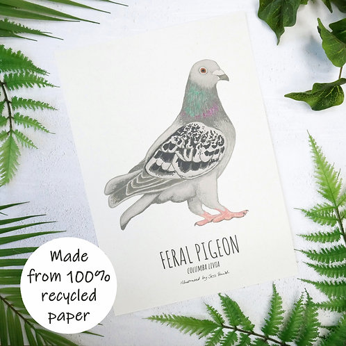 Unframed art print of an illustrated pigeon by Jess Smith from Silverpasta Crafts