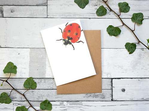 Silverpasta illustrated animal greetings card made from recycled paper featuring a ladybird with plastic free packaging