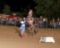 Show Horse.jpg