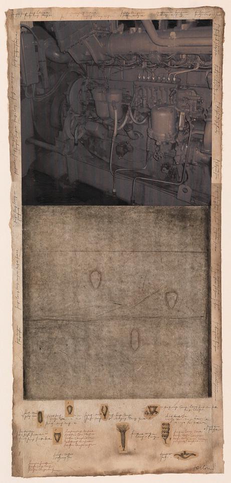 Ursus, 2009, tecnica mista su carta, cm 66 x 30