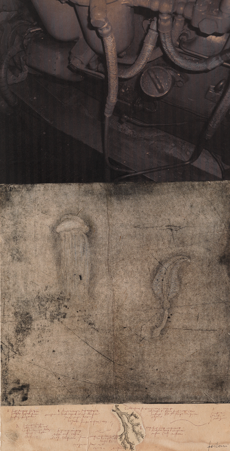 Ursus, 2009, tecnica mista su carta, cm 65,5 x 33,5