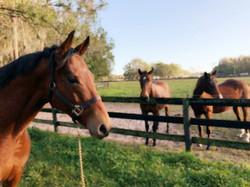better-mares.jpg
