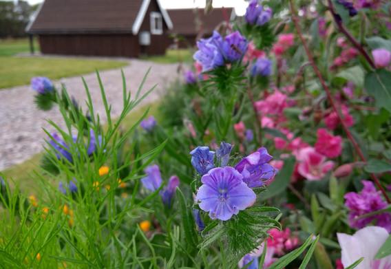 Wild Flower Bank