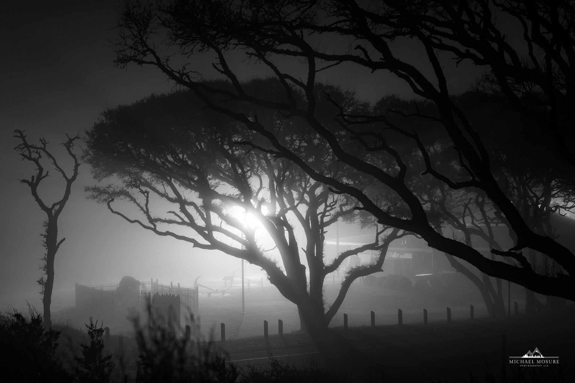 Fog Lit Oaks, Fort Fisher