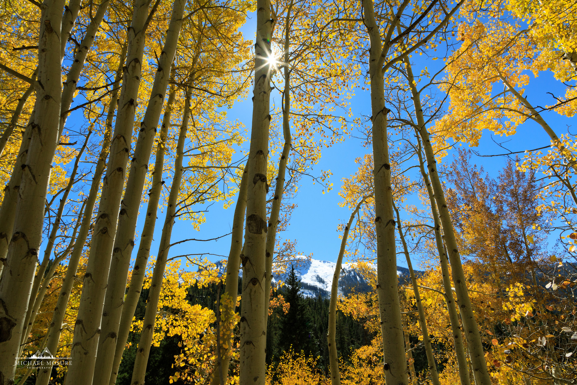 Aspen Trees, Independence Pass