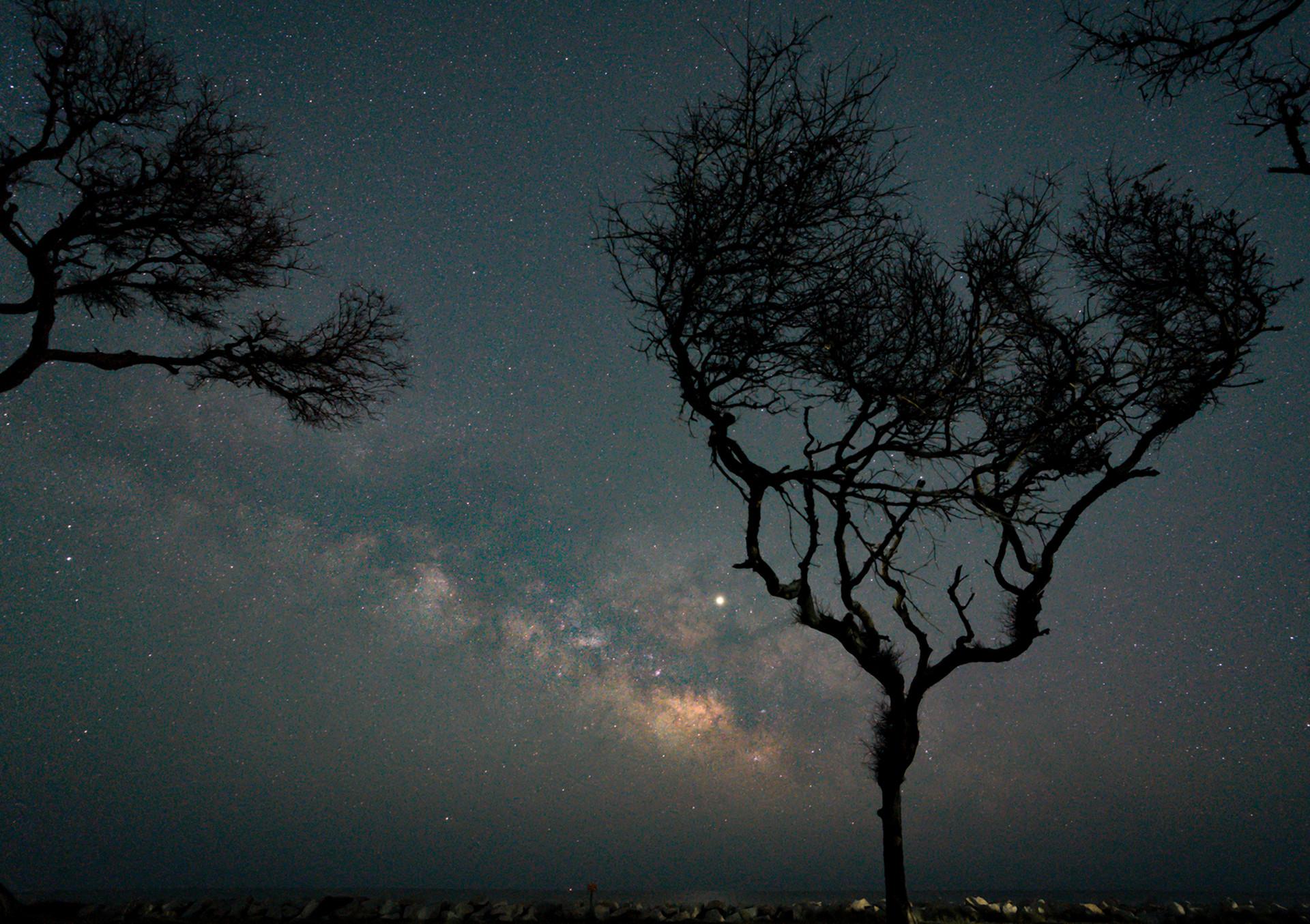 Live Oak Coastal Nightscape