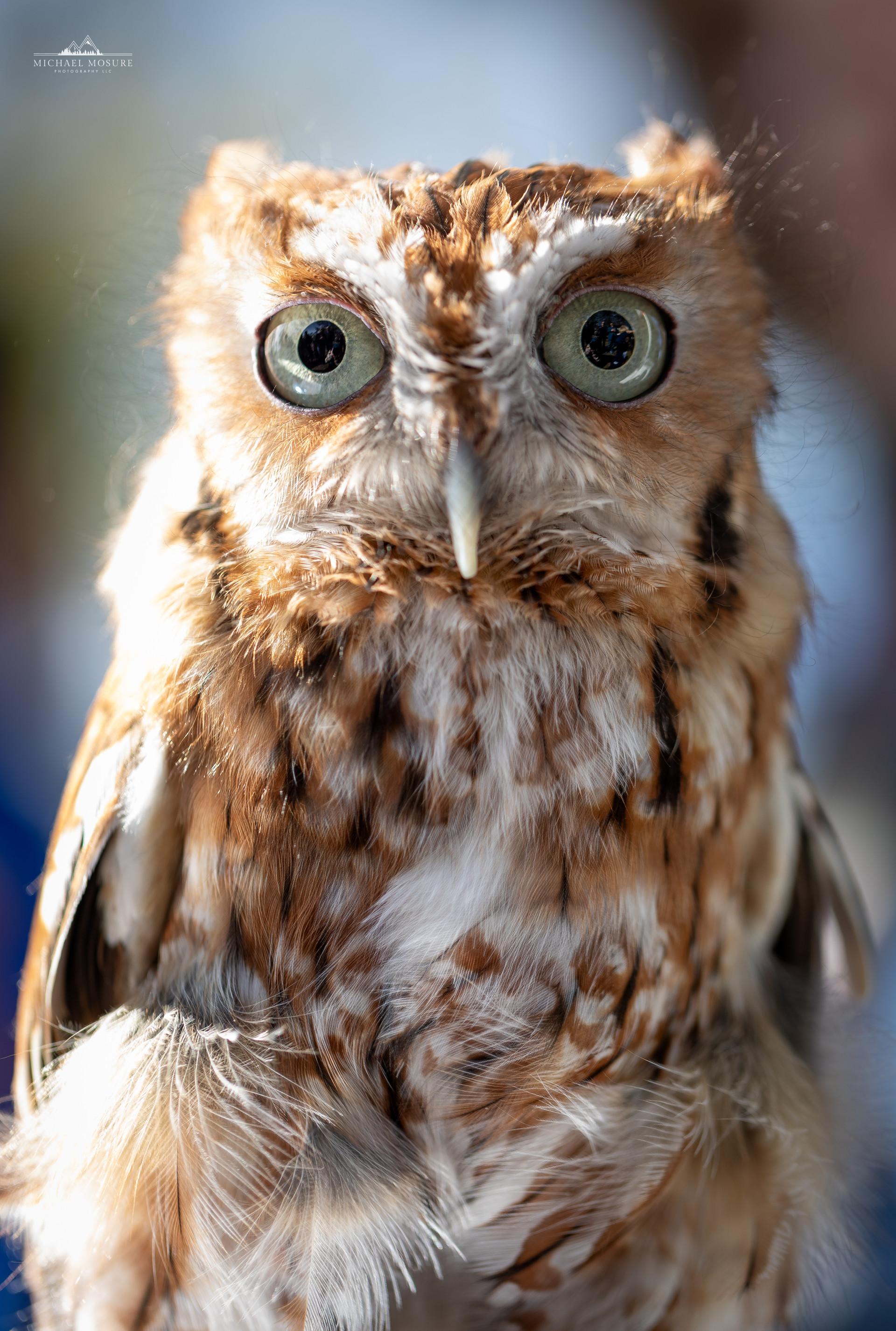 Curious Eyes