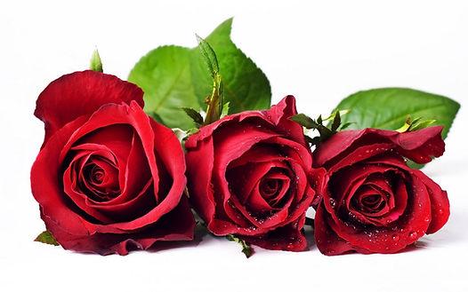 rose-flower-wallpaper-free_2560x1600_83159.jpg