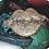 Thumbnail: Womb Healing Bars Variety Pack