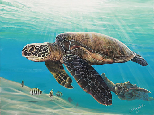 Sea Turtle Content