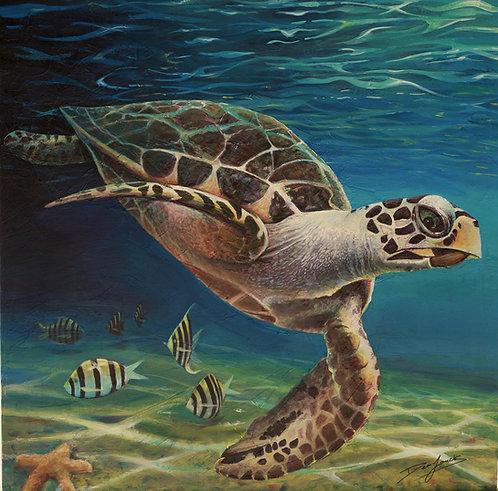 Sea Turtle Deep