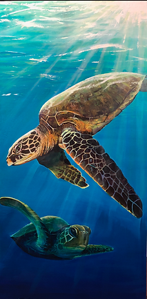 Sea Turtle 2.png