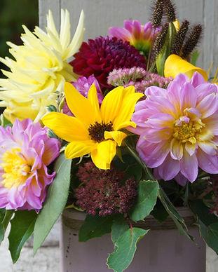 5dollaraugflowersdahliasedumsunflower.jp