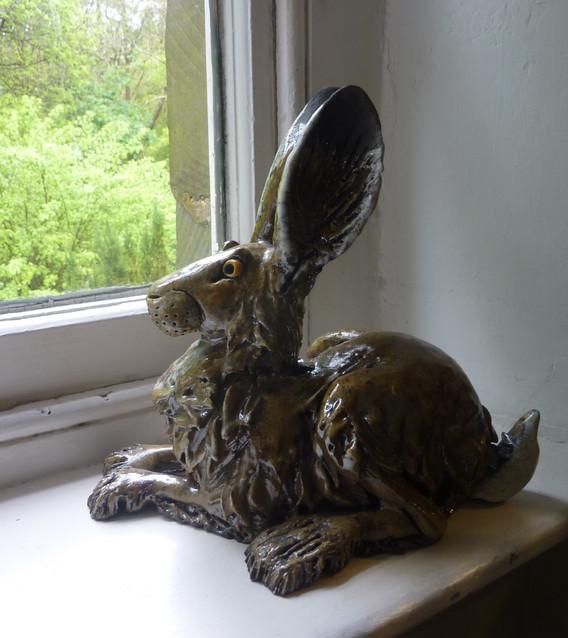 Hare squatting