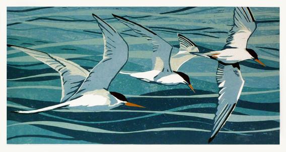 Terns over Malltraeth