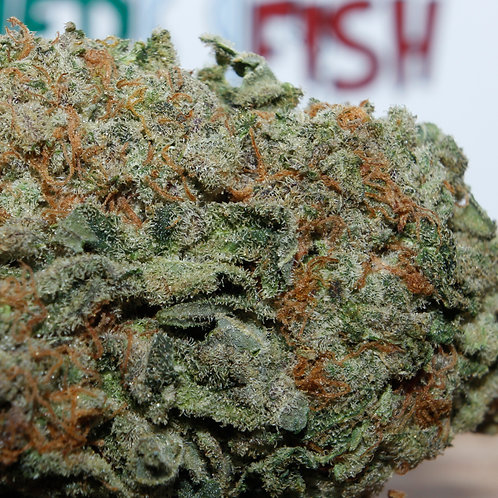 Blue Cheese  --  GREENHOUSE