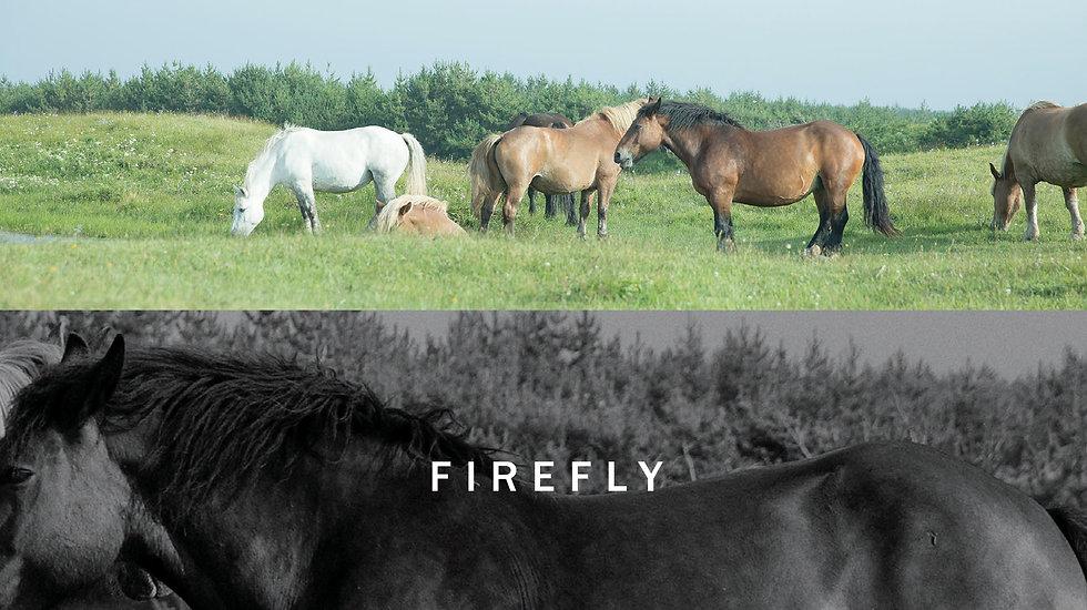 firefly_dm_190319_ol-1.jpg