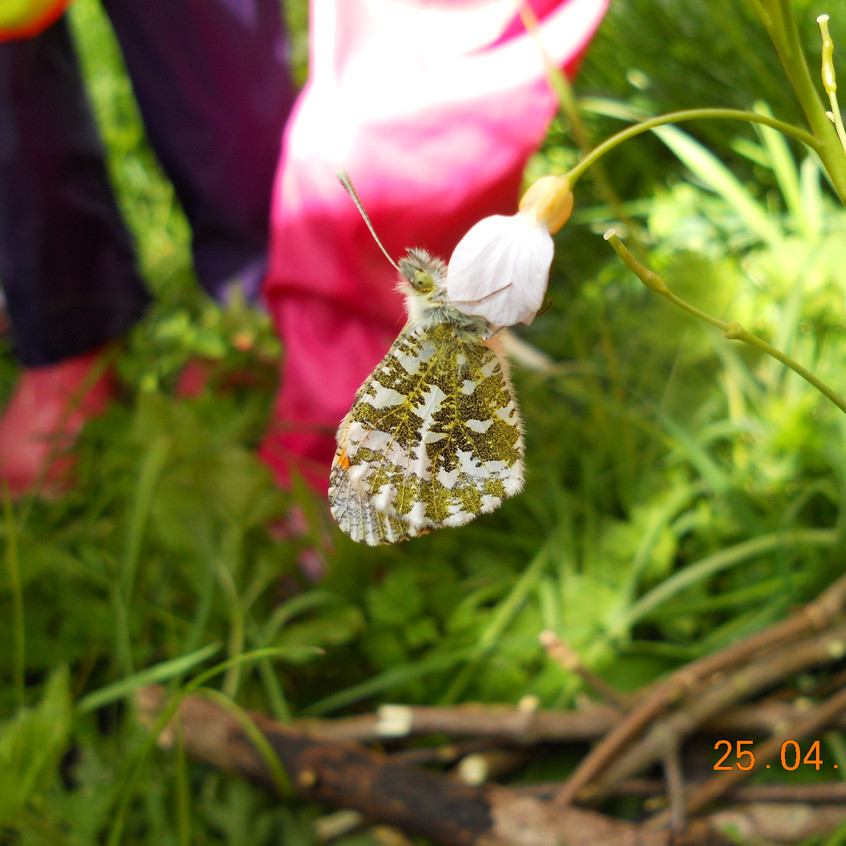 a camouflaged butterfly
