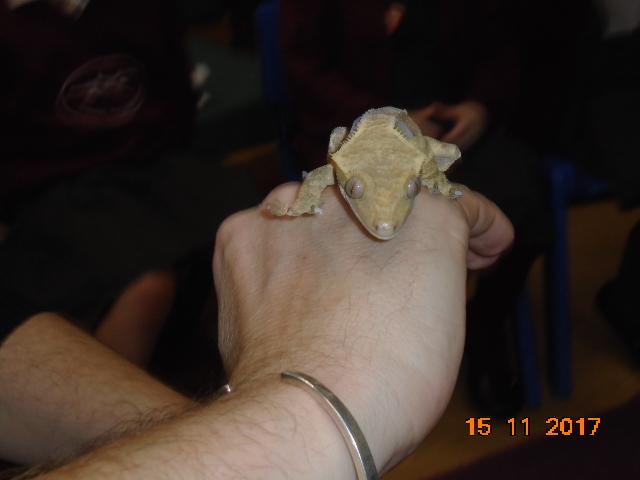 blog WED animals (21)