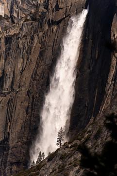 Dillon_040319_YosemiteFalls_028.jpg